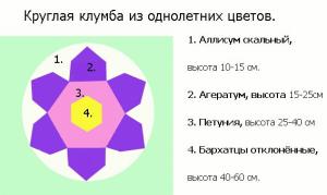 Проект высадки однолетников на круглой клумбе, в виде большого цветка