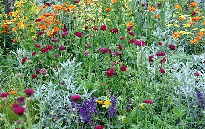 Цветущие лужайки
