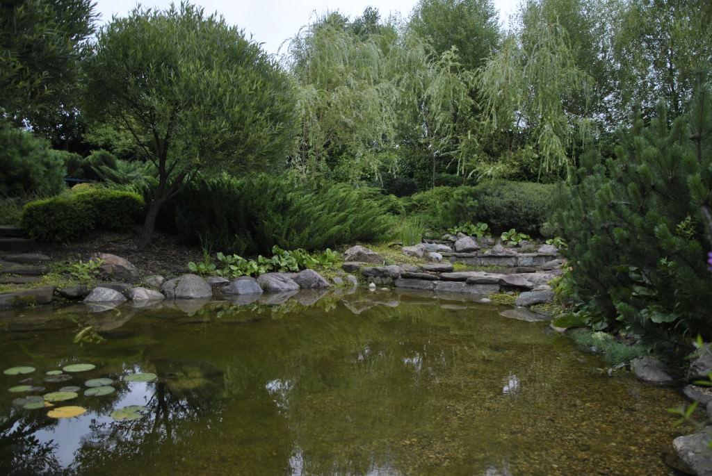 Чем озеленить вокруг водоема