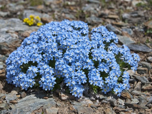 Все время цветущий сад фото