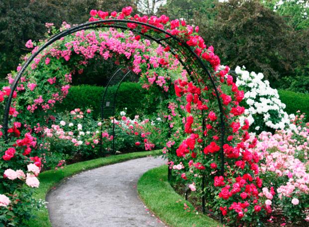 Кованые арки для сада фото