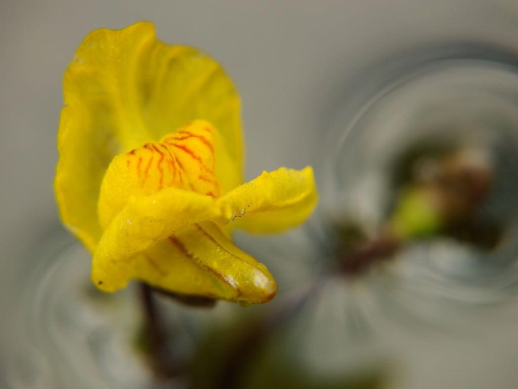 Какой кустарники цветы посадить у пруда?