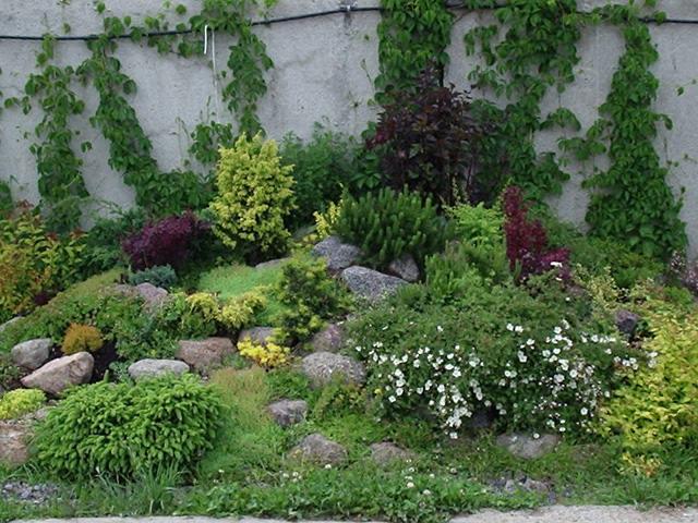 Характерные растения альпийского стиля