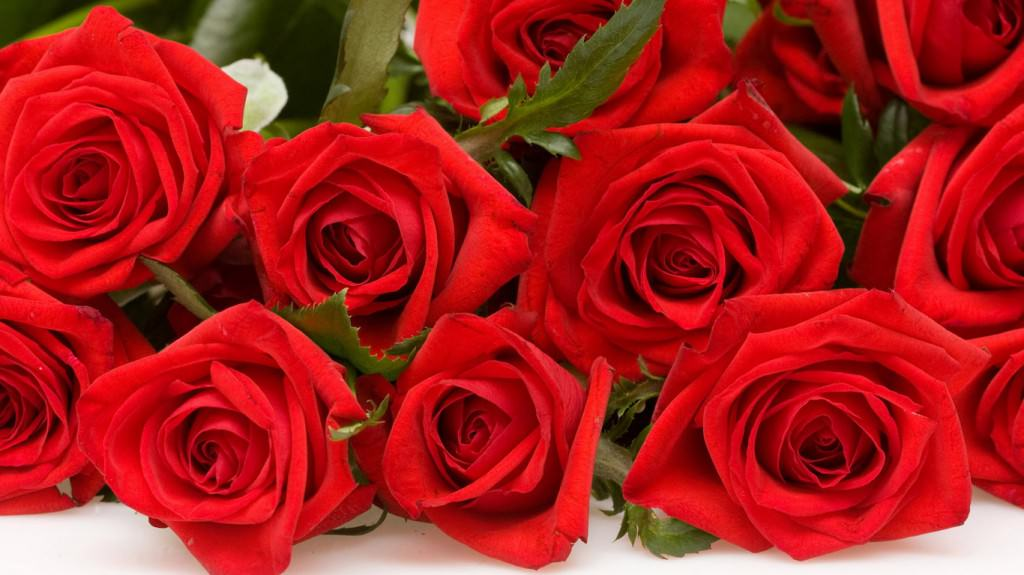 Чем укрывать розы на зиму видео