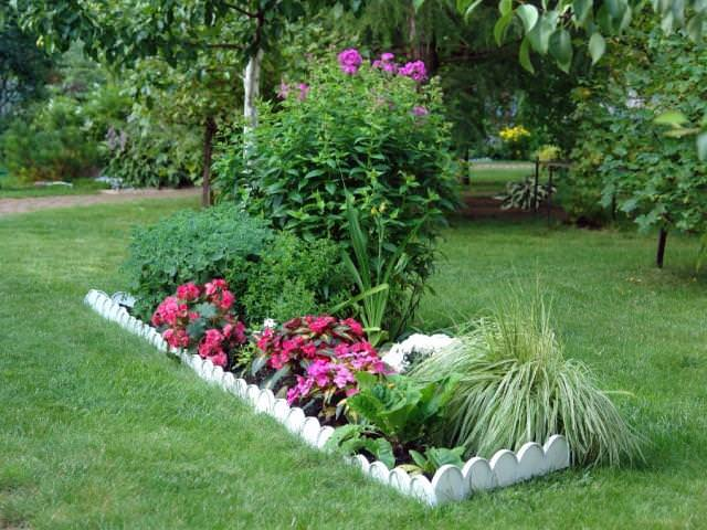 фото цветов для клумб с названиями