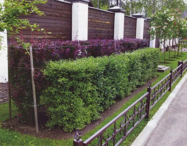 Как украсить вальер живой изгородьы фото?