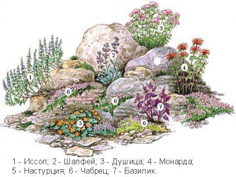 Растения светолюбивые для альпийская горка