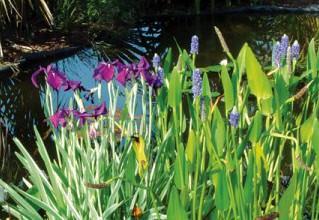 Плавающие растения в пруду