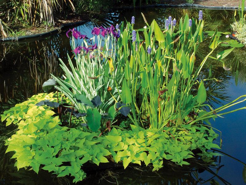Растения около пруда