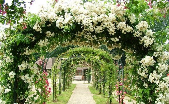 Какие цветы посадить для арки название?