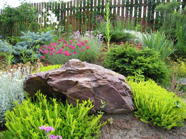 Как совместить розарий и каменистый сад?