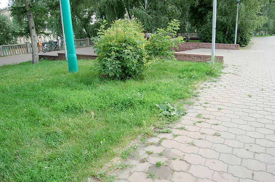 Неухоженный газон в парке