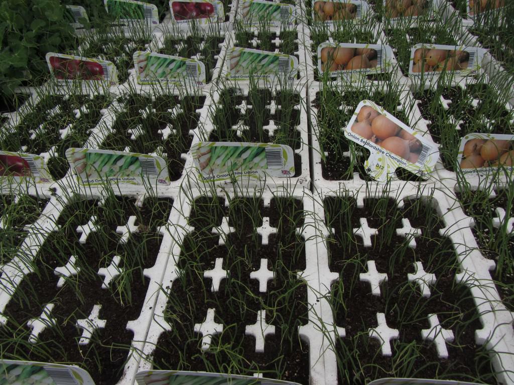 Таблички для цветов в детском спду