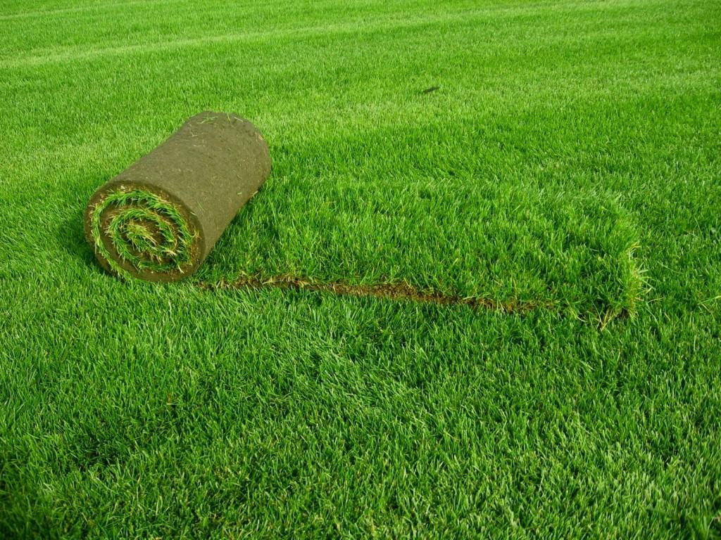 Удобрение для газона осень