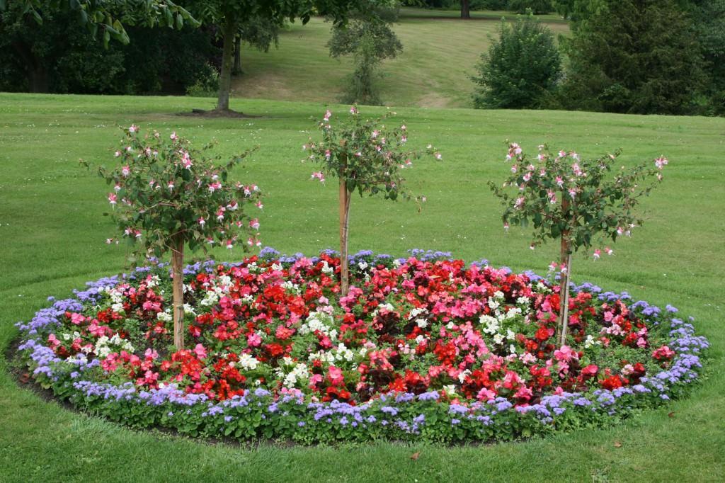 Цветы для клумбы круглая