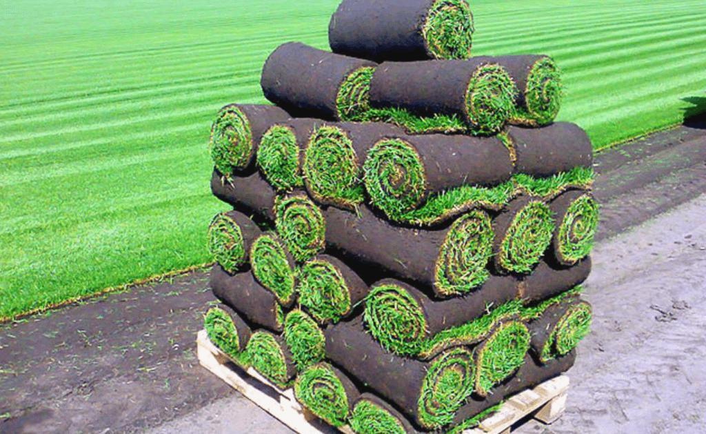 Укладка газона зимой