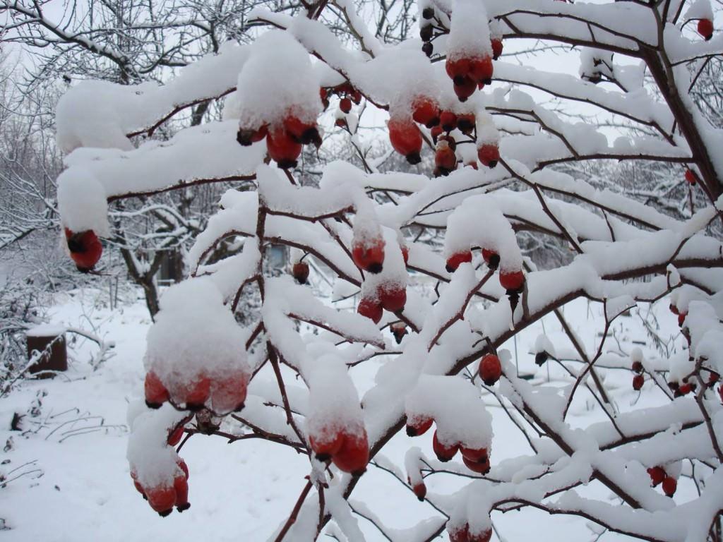 Как украсить сад зимой?