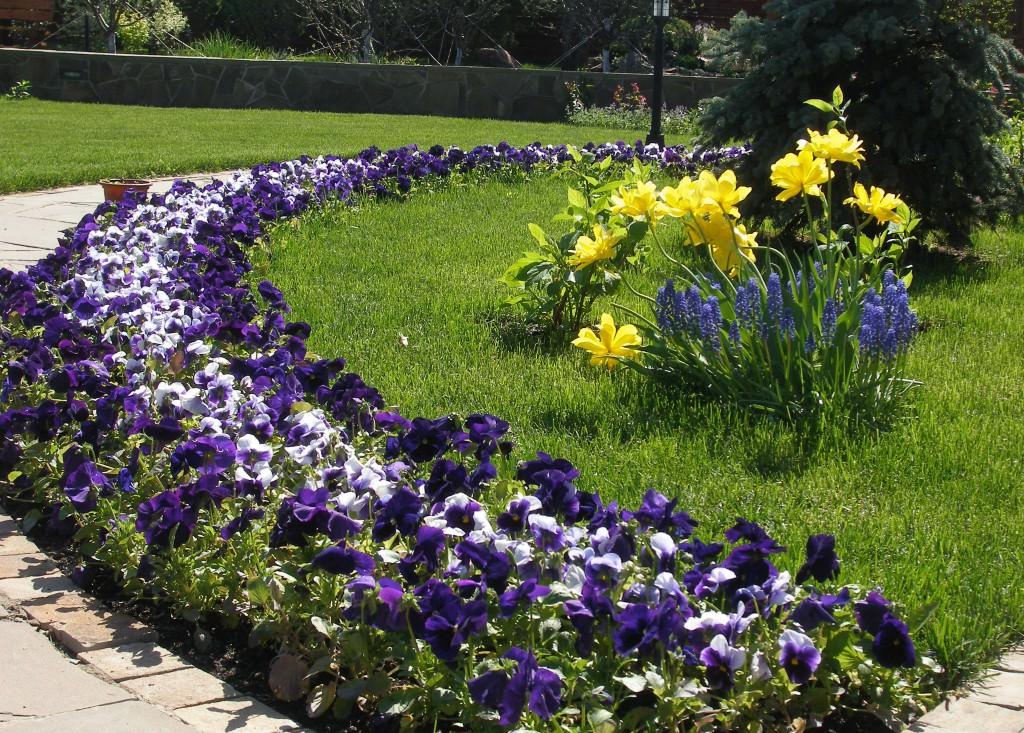 Цветы на клумбах и у дома фото