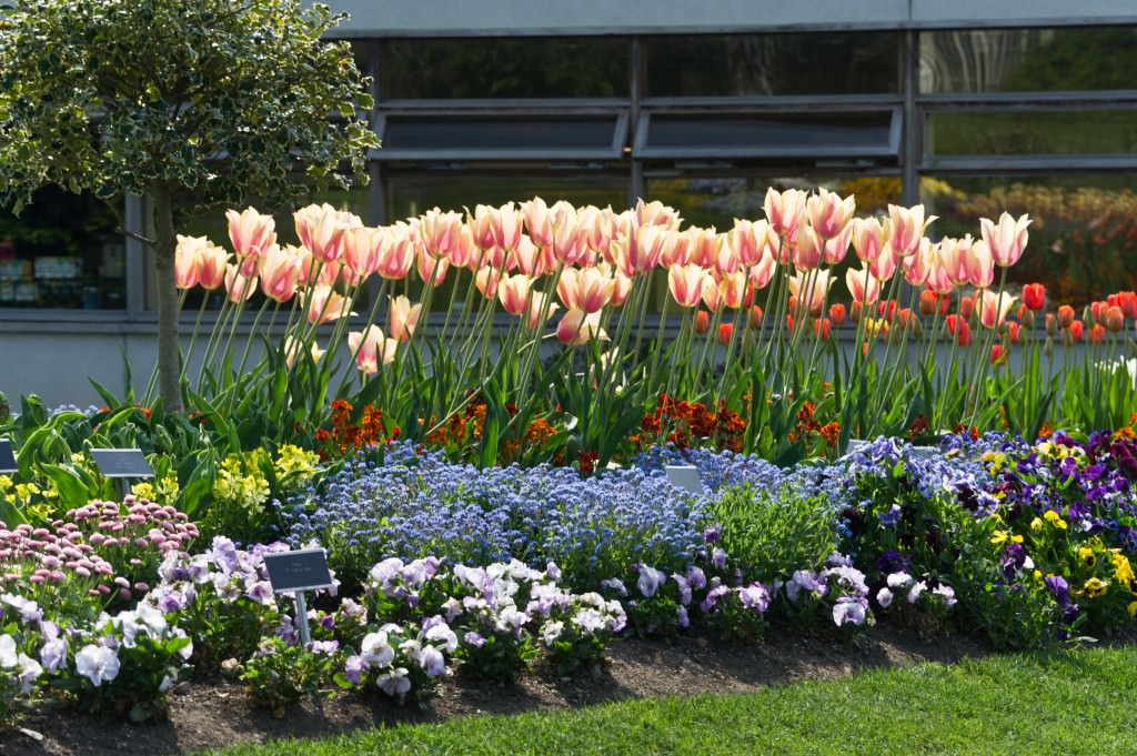 тюльпаны на даче дизайн фото всем родителям малышей