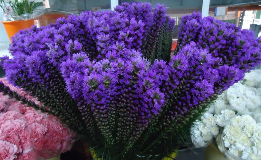 Лиатрис цветок