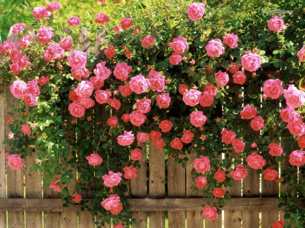 Декорация стен живым вьющимся цветов