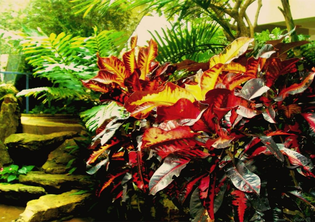 Декоративно цветущие комнатные растения