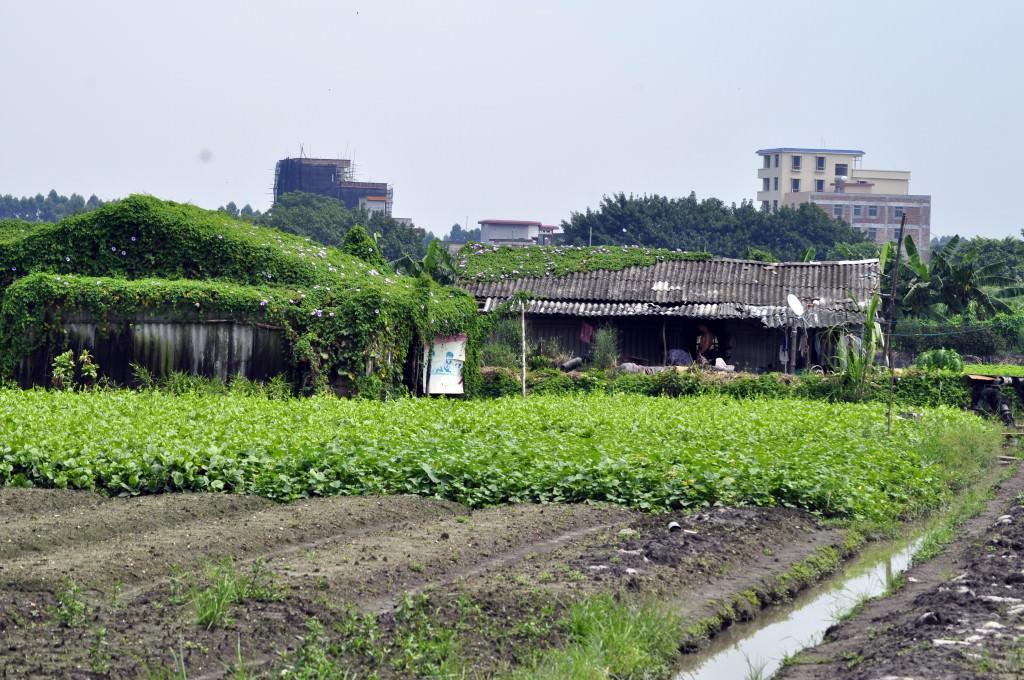 Растения на кровле домов