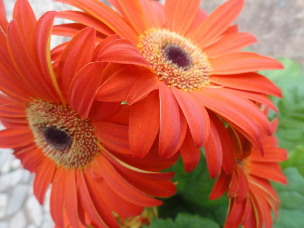 Цветы в дизайне сада фото