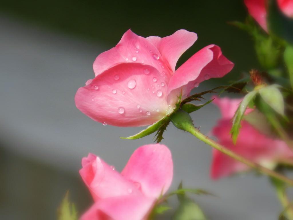 Сочетание цветов в саду фото