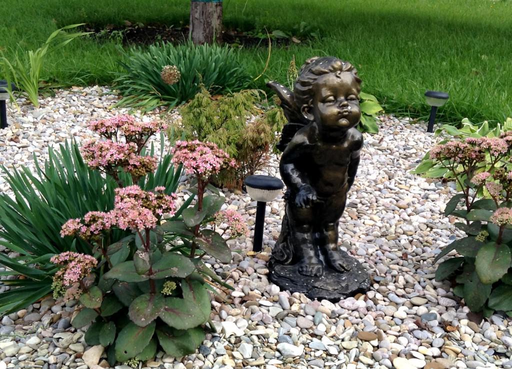 Растения для гравийного сада