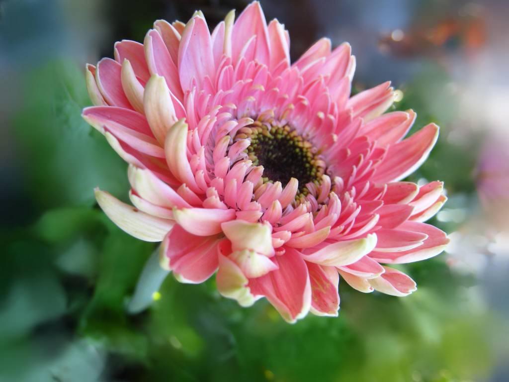 Цветы приусадебном участке фото