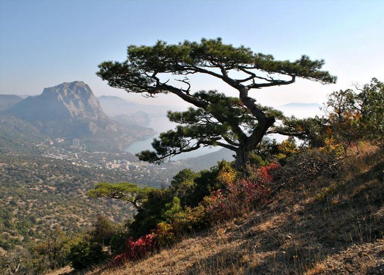 дело том, деревья крым названия фото прически