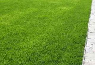 Ухоженный газон загородного участка