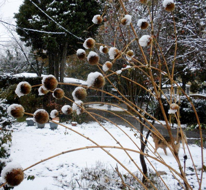 Ландшафт дизайн зимний