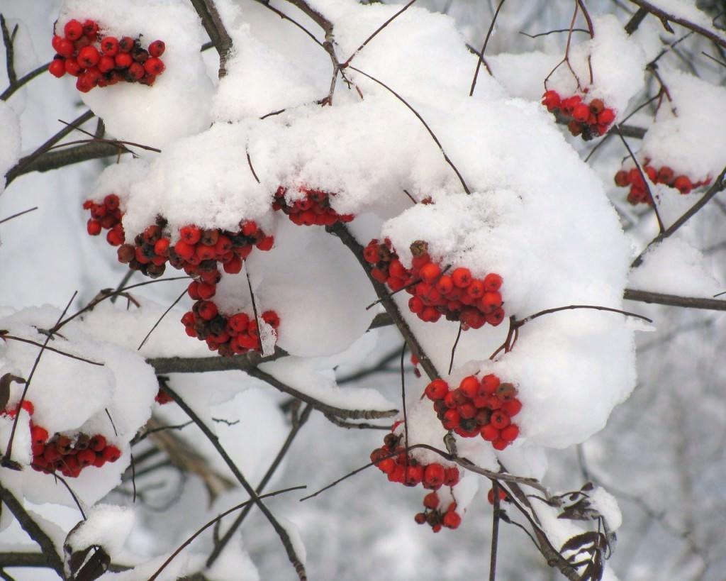 Как украсить участок зимой?