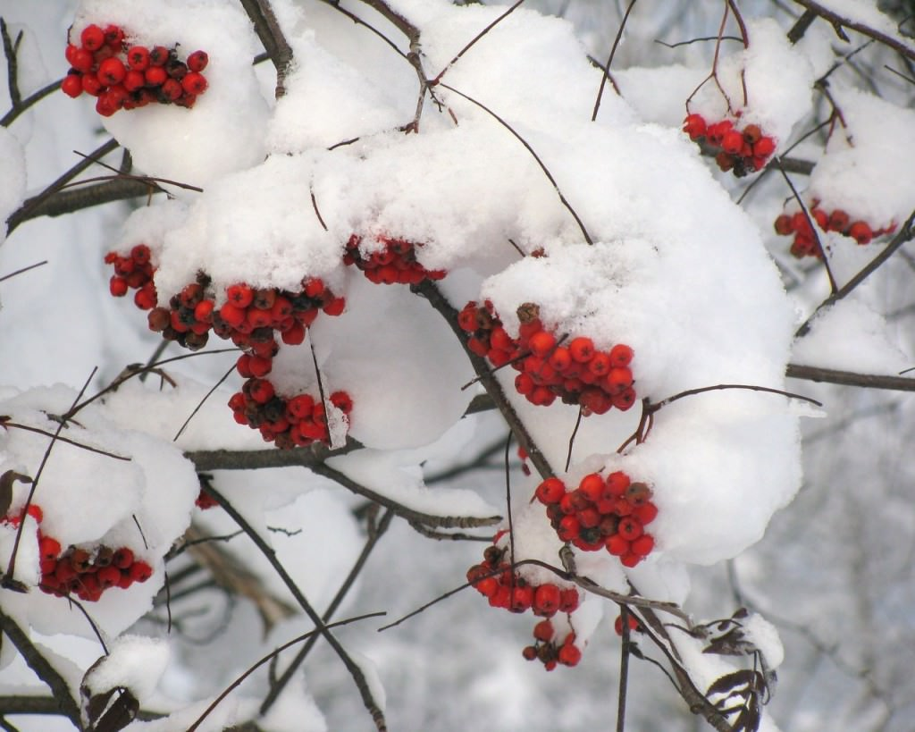 Участок зимой