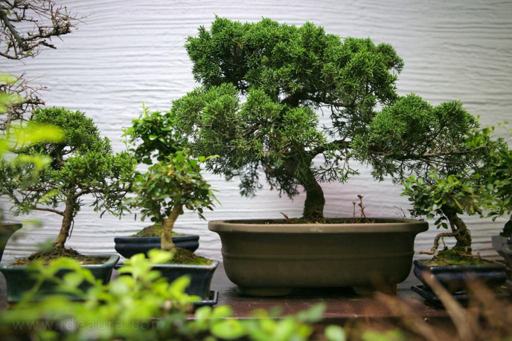 Японский сад в миниатюре на даче