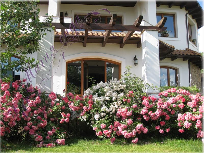 Плетистые розы в ландшафтном дизайне фото