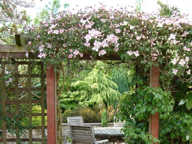 Шпалеры в саду