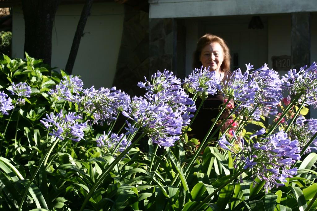 Агапантус садовый фото