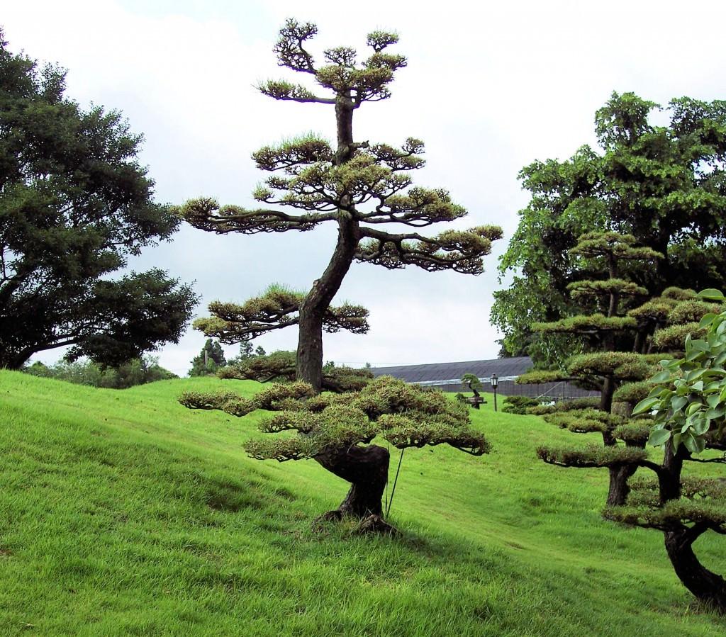 Что такое крона у Дерева?