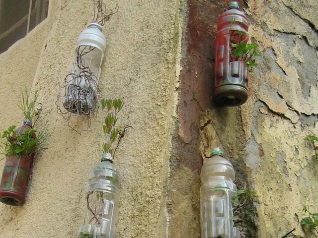 Вырастить клубнику в пластиковых бутылках