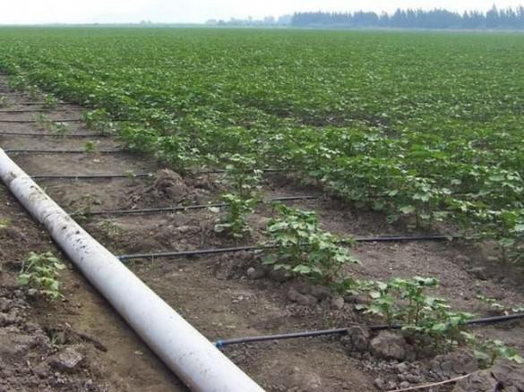 Схема капельный полив на винограднике
