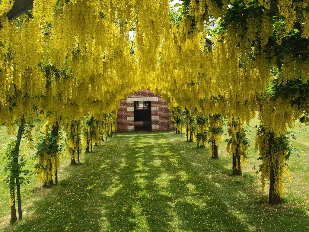 Садовые арки берсо своими руками