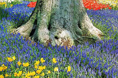 Цветник под деревом