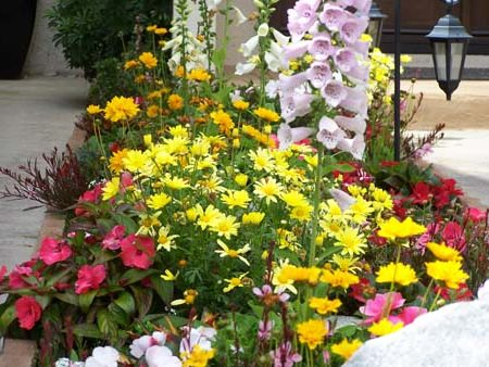Цветы, цветущие все лето