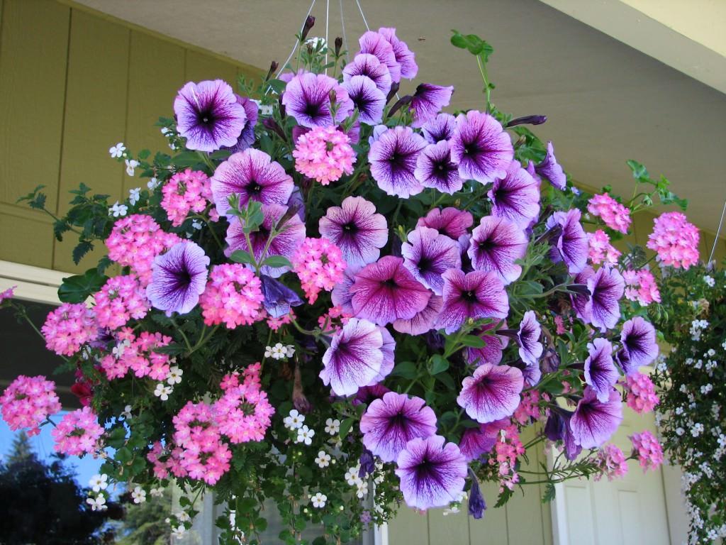 Искусственные цветы ампельные