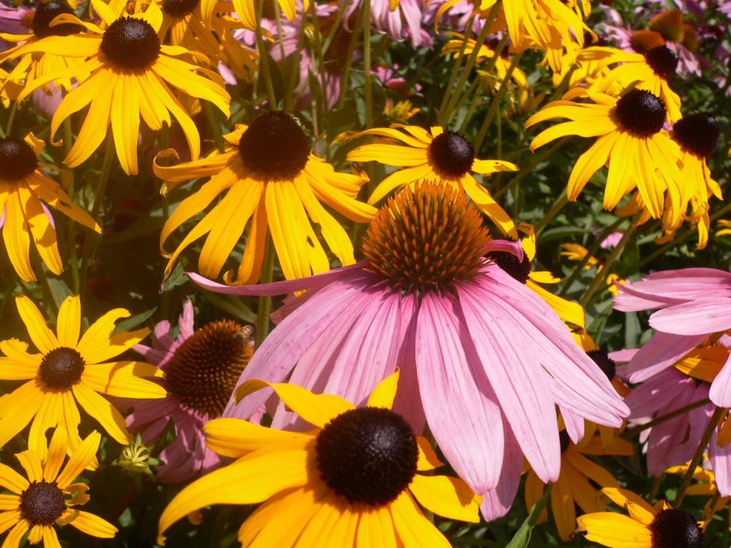 Цветы для высадки на теневой стороне