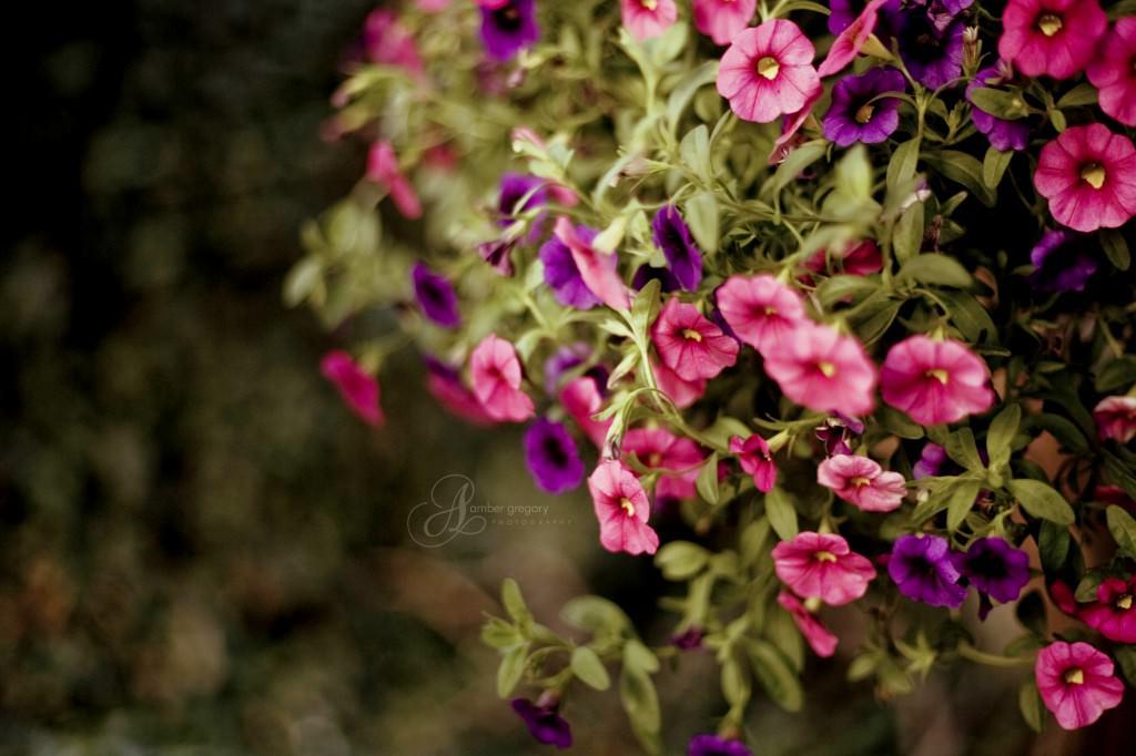 Ампельные цветы теневые