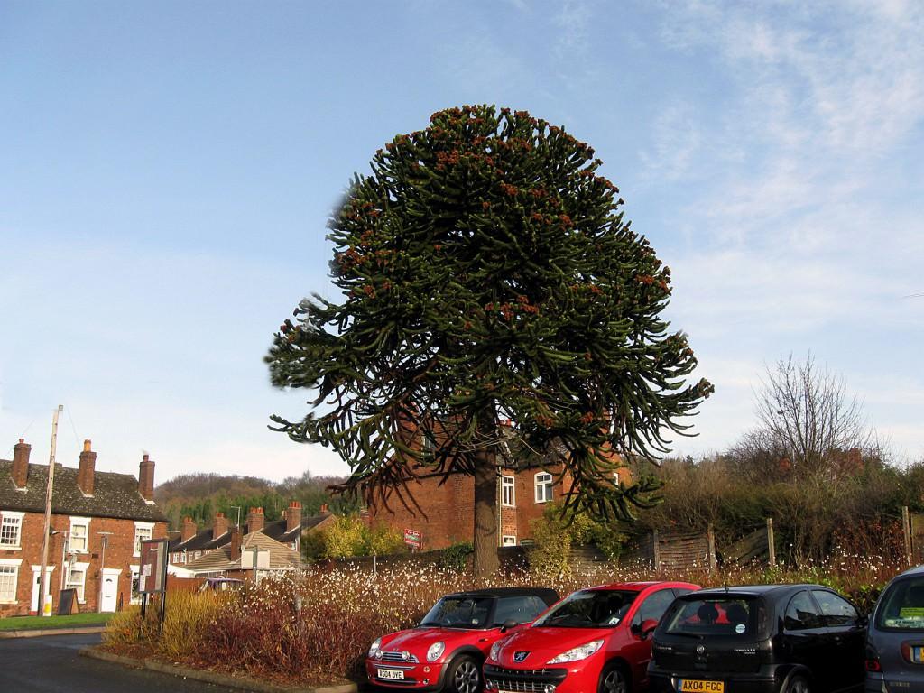 Композиции с лиственными деревьями